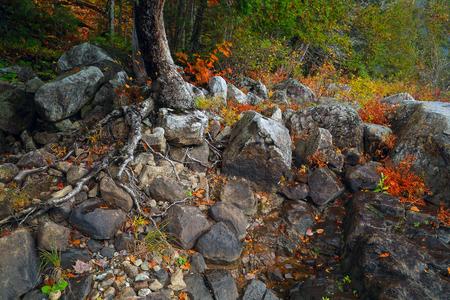 山の森林に赤、黄色の葉、岩の多い海岸。秋の時間の山川。石川。カナダ