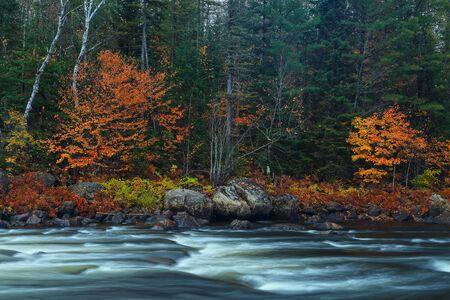 カナダの秋。秋の色。秋の色。川のほとり。渓流。石、川。秋の森。 写真素材