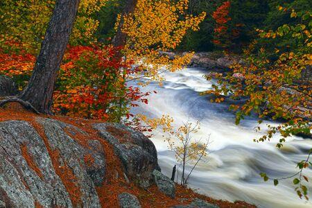 カナダの秋。秋の色。秋の色。渓流。森の中の石。川のほとり。明るい色。石、川。秋の森。