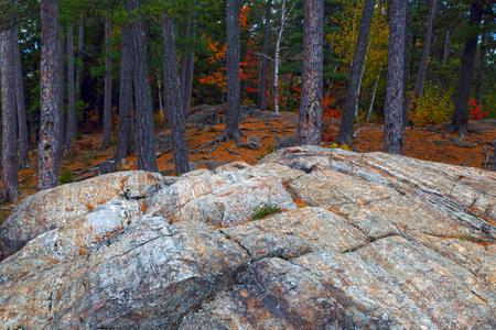 カナダの秋。秋の色。森の中の石。秋の森。カラフルな秋の風景です。自然の背景。