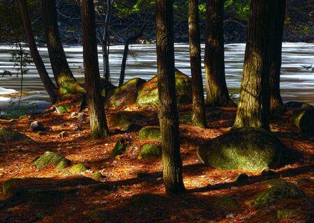 山川に美しい秋の朝。劇的な秋の空。昇る太陽の光線で黄色の木。秋の風景です。カナダの秋。 写真素材