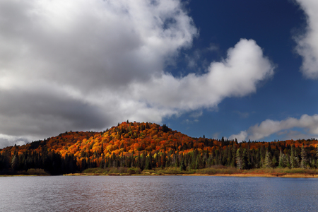 色の秋の森の水しぶき。反射冷たい、暗い水の秋の森。悲観的な秋の空。鉛のような雲。雲の切れ間から太陽の光は、黄色の木を照らします。秋の 写真素材