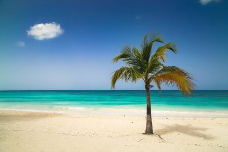 Vacation summer holidays background wallpaper - sunny tropical exotic Caribbean paradise beach with white sand, azure water and palm tree branches over blue sky. Caribbean Sea coast, Dominican republic, Saona island.