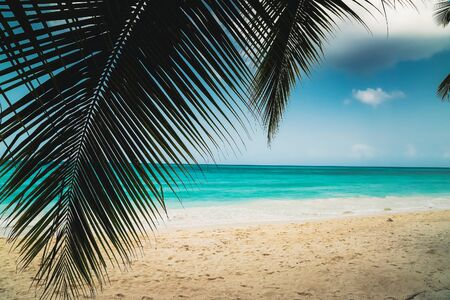 A look at the Caribbean Sea through the branches of a tropical plant. Landscape of paradise tropical island beach with perfect blue sunny sky. Vacation holidays summer background. Caribbean wild nature scenery near the beach in Saona.