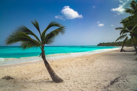 Vacation summer holidays background wallpaper. Sunny tropical exotic Caribbean paradise beach with white sand, azure water and palm tree branches over blue sky. Caribbean Sea coast, Dominican republic, Saona island.