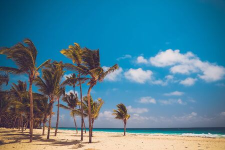 The picture was taken at the Atlantic Coast. Coconut Palm trees on white sandy Bavaro beach in Punta Cana, Dominican Republic..