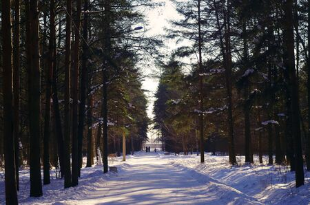 Road Among The Trees In The Forest In Winter