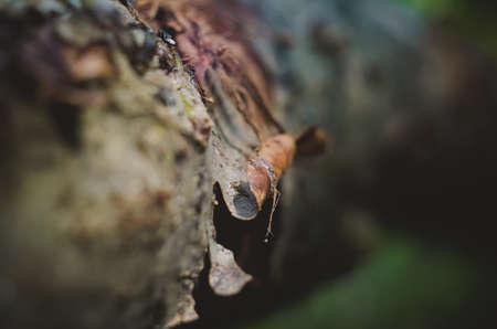 Lichen on tree branch