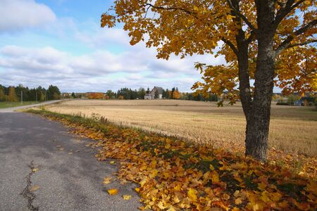 Autumn road trip in Finland and a yellow maple near the village in fine weather.
