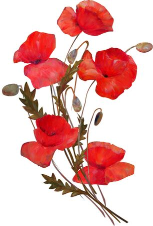 Poppy flowers bouquet isolated on white background