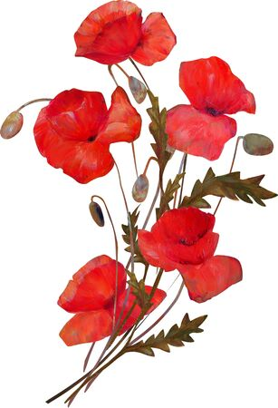 Poppy flower isolated art illustration .Icon on canvas.