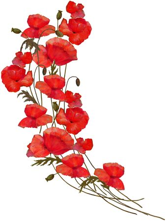 Poppy flowers isolated oil colors illustration .Icon on canvas.