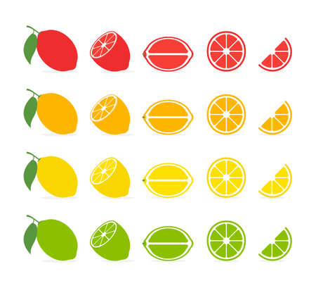 Citrus slices. Vector isolated icon. Tropical fruit isolated. Grapefruit orange lemon lime vector design. Citrus collection isolated on white background. EPS 10