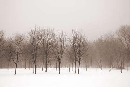 Misty winter landscape sepia toned. Retro look