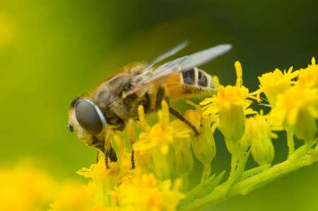 Macro shot of bee on a yellow flower Stock Photo