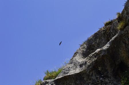 predictor: Eagle in the sky, Kyrgyzstan Stock Photo