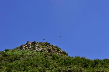 kyrgyzstan: Águila en el cielo, Kirguistán Foto de archivo