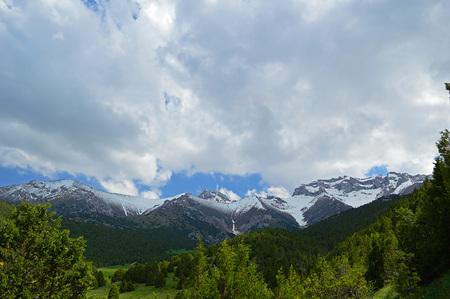 kyrgyzstan: Juniper in the mountains, Haidarkan area, Kyrgyzstan Foto de archivo