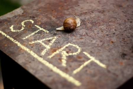snails: snail moving from the start