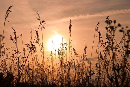 wheat against the beautiful sunset Stock Photo - 8001124