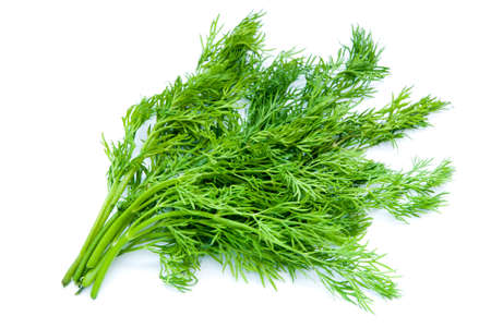 dill isolated on a white background Stock Photo - 13189648