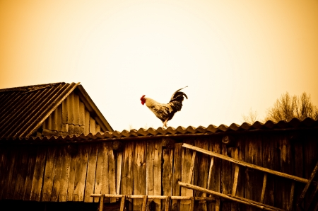 farm home: cock on a rural roof Stock Photo