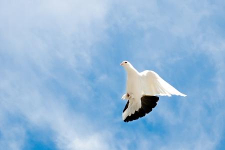 dove flying in the sky photo