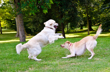 two dogs playing on a green grass outdoors Standard-Bild