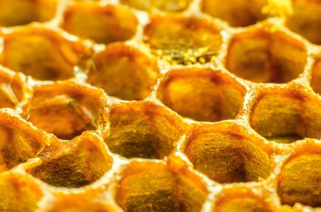 honeycomb macro as a background Standard-Bild