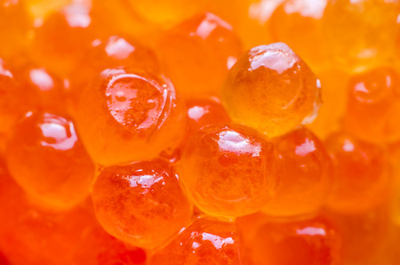 background made of red caviar macro