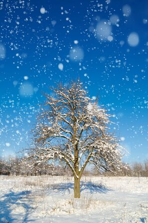 single snow tree in the field Stock Photo - 126563831