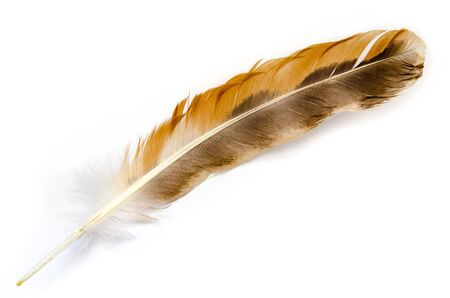 bird feather isolated on a white background Stock Photo