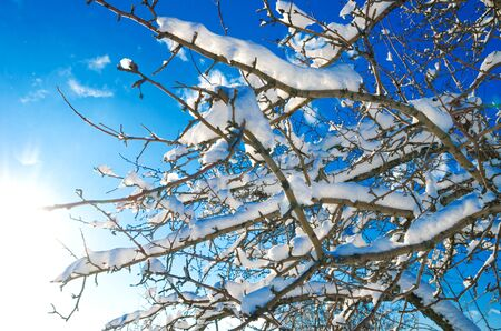 branches with snow against the blue sky and sun