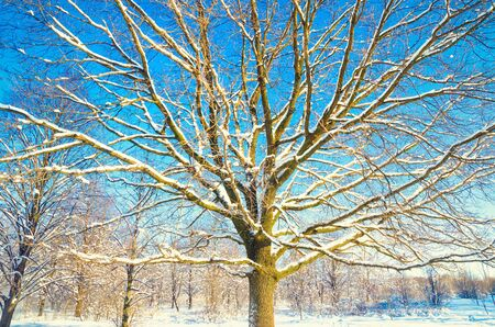 winter landscape of trees with snow