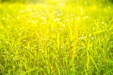 background made of green grass Фото со стока