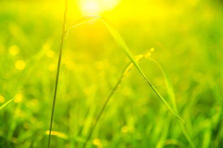 background made of green grass Zdjęcie Seryjne