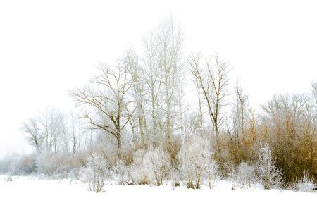 winter landscape isolated on a white background Reklamní fotografie