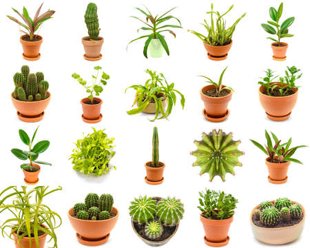 plants collection isolated on a white background