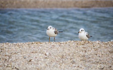 Sea. Beautiful seascape. Seagulls on the sea. Seagulls on the shore