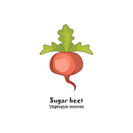 Sugar beet colored vector illustration.