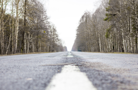Old asphalt road. Asphalt road and spring forest