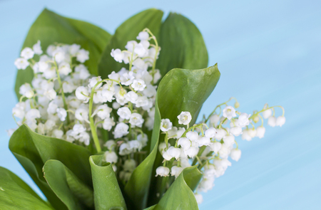 Lilies of the valley on a turquoise wooden background. A bouquet of lilies of the valley. Lilies of the Valley