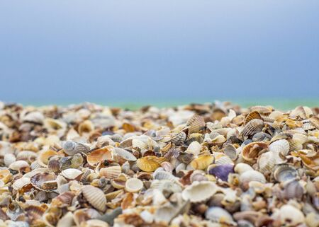 Seashells close-up and blue sky