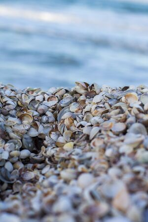 Seashells on shore. Sea and seashells. Sea shells on background sea.