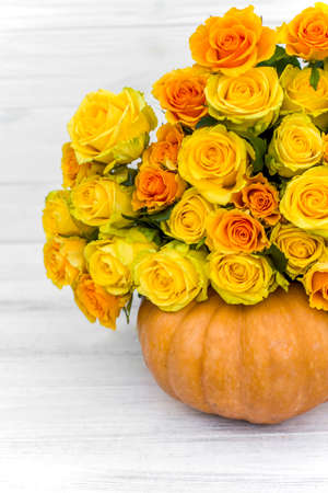 bouquet of yellow roses and pumpkin on white wooden board. Beautiful yellow roses. Autumn decor