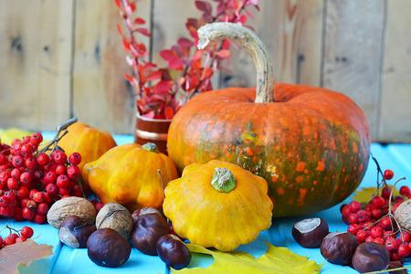 vegetable squash: Autumn still life - pumpkins, squash, chestnuts, walnuts, ash on a wooden background Stock Photo