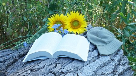big flower: Big flower of sunflower lies with book. Book reading. Stock Photo