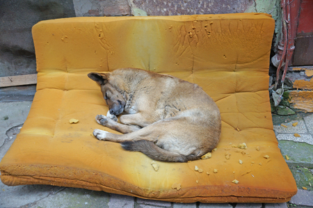 A big full dog sleeps on a soft orange mattress on the street. A homeless dog sleeps on a soft mattress. Helping homeless animals.