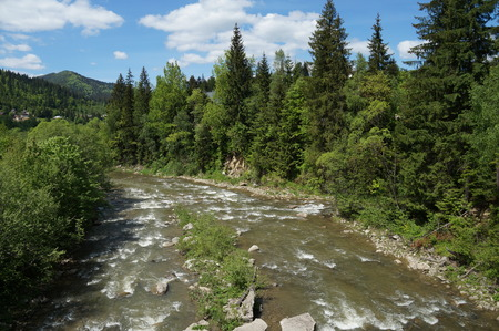 carpathians: Nice view of the mountain river. The mountain river flows rapidly among the Carpathian mountains and coniferous forests.