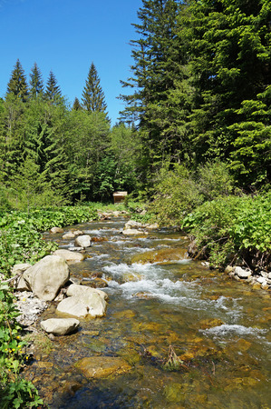 Nice view of the mountain river. The mountain river flows rapidly among the Carpathian mountains and coniferous forests.